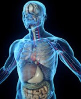 Fisiologi dan Anatomi Pada tubuh Manusia